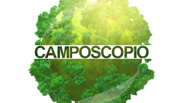 Blog: Camposcopio